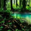 Dark Ancient Forest Escape